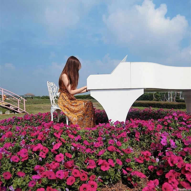 小清新正妹Estelle 新社花海花海中弹钢琴仙气逼人